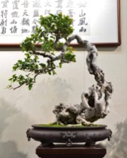 Fascinating Bonsai Tree Design Ideas For Your Room02