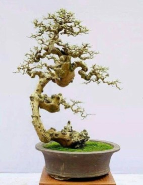 Fascinating Bonsai Tree Design Ideas For Your Room15