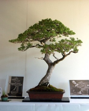 Fascinating Bonsai Tree Design Ideas For Your Room17