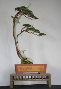 Fascinating Bonsai Tree Design Ideas For Your Room22