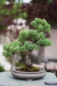 Fascinating Bonsai Tree Design Ideas For Your Room23