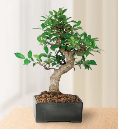 Fascinating Bonsai Tree Design Ideas For Your Room24