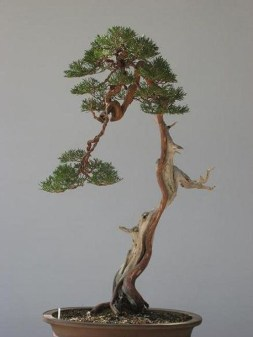Fascinating Bonsai Tree Design Ideas For Your Room26