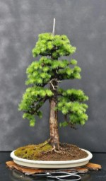 Fascinating Bonsai Tree Design Ideas For Your Room29