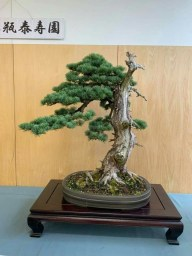 Fascinating Bonsai Tree Design Ideas For Your Room30