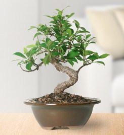 Fascinating Bonsai Tree Design Ideas For Your Room31