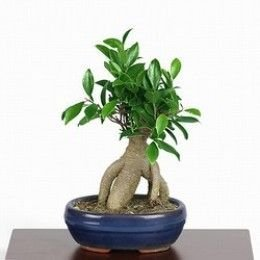 Fascinating Bonsai Tree Design Ideas For Your Room32