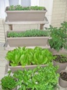 Wonderful Veggies And Fruits Potted Design Ideas For Your Garden 03