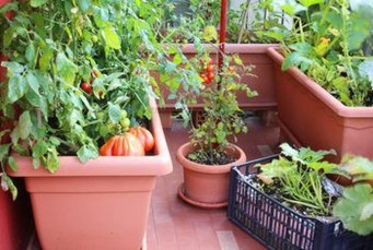 Wonderful Veggies And Fruits Potted Design Ideas For Your Garden 05