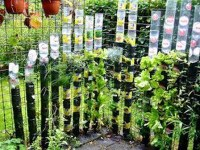 Wonderful Veggies And Fruits Potted Design Ideas For Your Garden 15