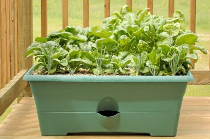 Wonderful Veggies And Fruits Potted Design Ideas For Your Garden 16