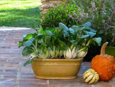 Wonderful Veggies And Fruits Potted Design Ideas For Your Garden 18
