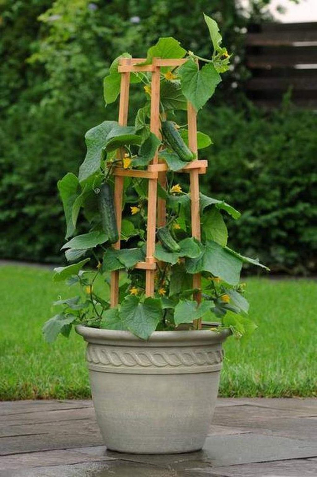 Wonderful Veggies And Fruits Potted Design Ideas For Your Garden 29