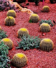 Beautiful Front Yard Cactus Garden Ideas 01