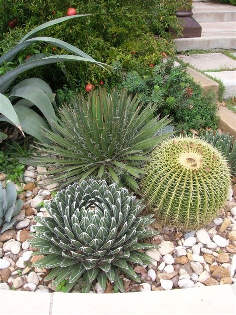Beautiful Front Yard Cactus Garden Ideas 23