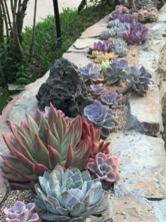 Beautiful Front Yard Cactus Garden Ideas 26