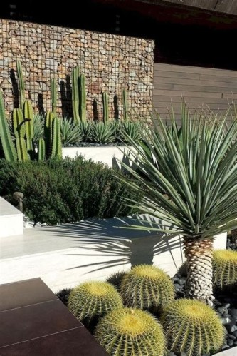 Beautiful Front Yard Cactus Garden Ideas 32