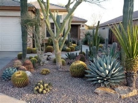 Beautiful Front Yard Cactus Garden Ideas 44