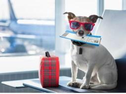 Aeroportul Cluj. Nou! Zborul cu animalele de companie este permis din această lună 12