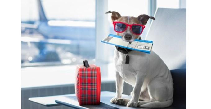 Aeroportul Cluj. Nou! Zborul cu animalele de companie este permis din această lună 13