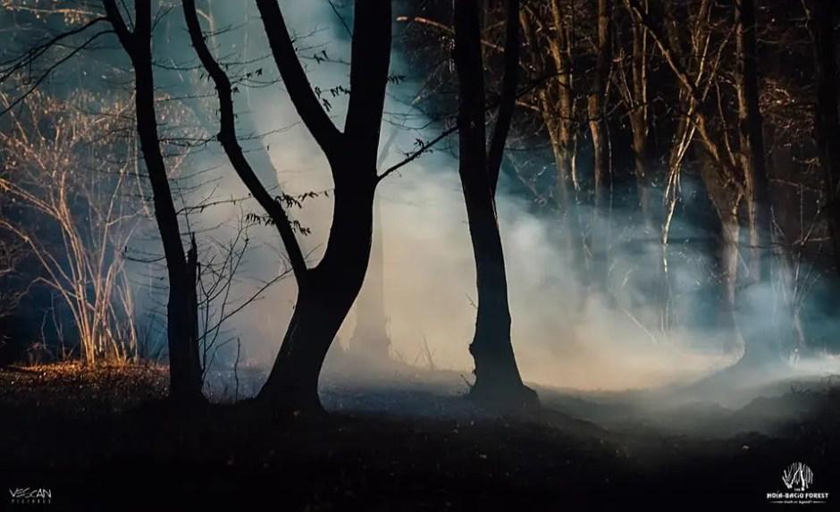 Pădurea Hoia-Baciu