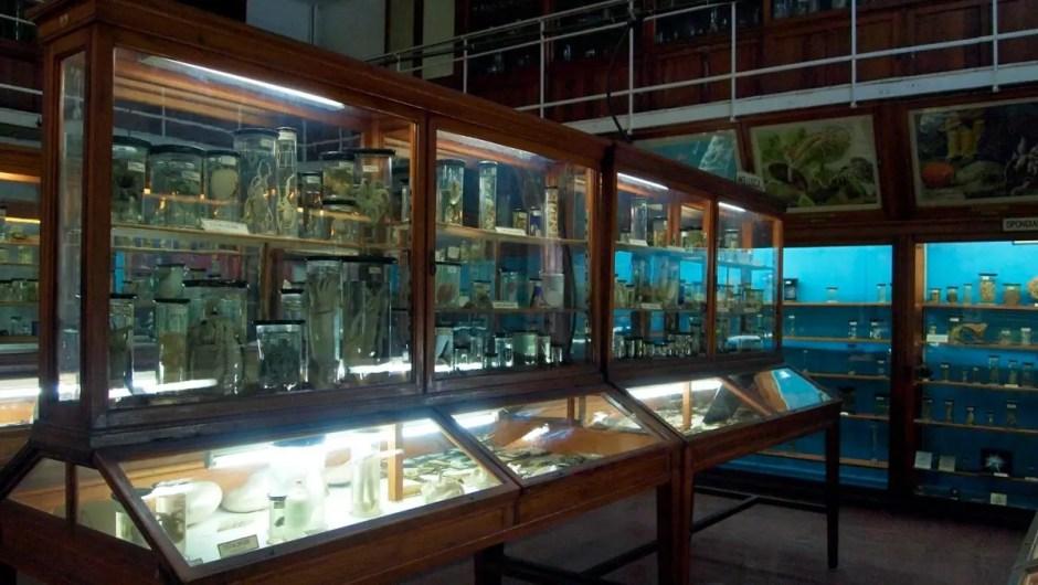 program muzeul zoologic cluj