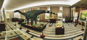 muzee cluj