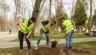 plantare arbori cluj