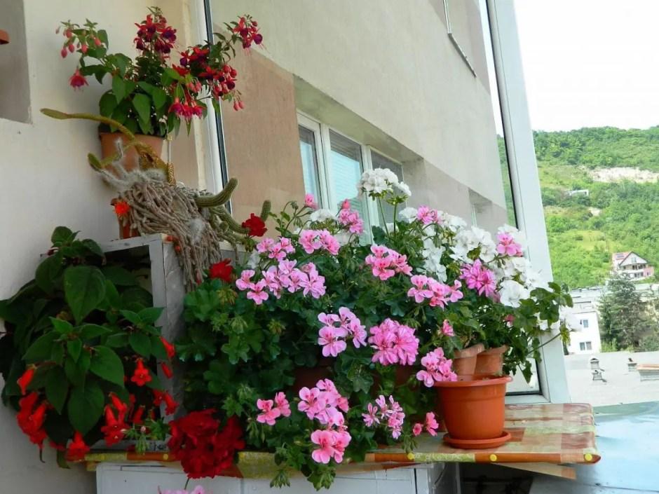 FOTO | Au fost desemnați câștigătorii concursului ''Clujul cu flori''