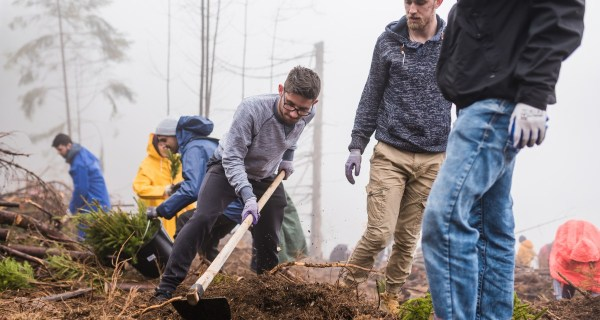 Aproape 12.000 de copaci au fost plantaţi pe Valea Drăganului într-o acţiune coordonată de organizatorii MOX