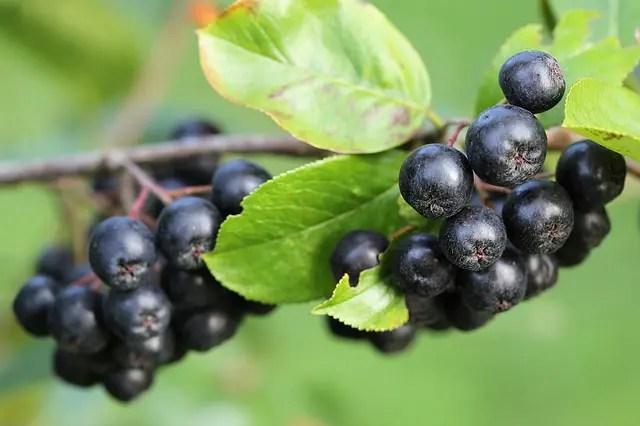 Ce avantaje oferă dulceata de aronia și de ce ar trebui sa o consumi