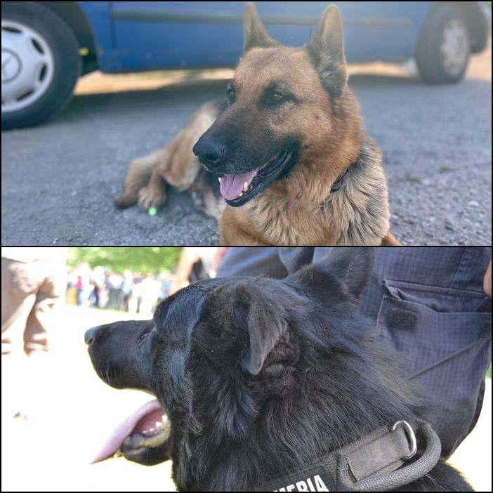 Max şi Eja doi dintre câinii Jandarmeriei Cluj au ieşit la pensie