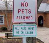 ... a bit contradictory, don't you think? Maybe it's just me, but I still don't know whether I can bring my dog or not.