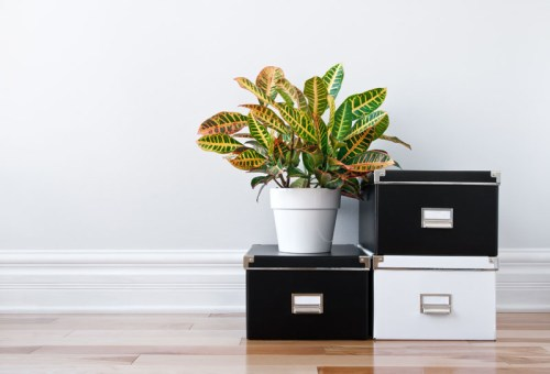 Professional decluttering and organizing consultation