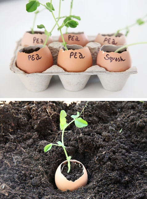 i gusci di uova diventano degli alternativi vasi per far crescere le piantine