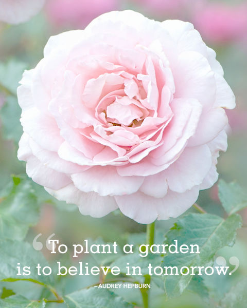 """""""To plant a garden is to believe in tomorrow."""""""
