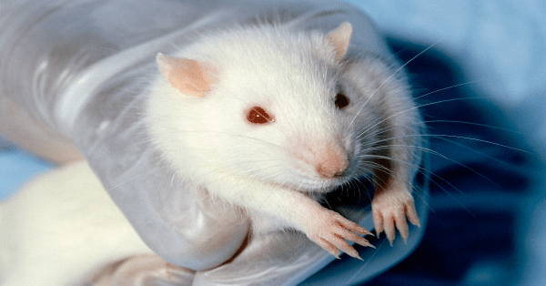 UK has eliminated 1 million animal tests in last 40 years