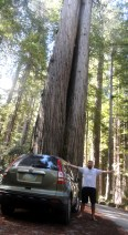 Beatrice is there for size comparison. BIG TREES!
