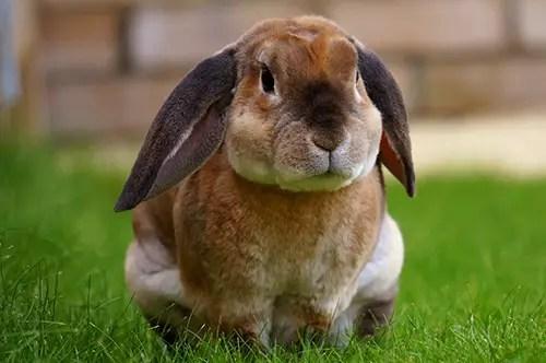 rabbit veterinary consultation melbourne