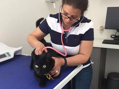 black cat dr irene mitry checkup clyde
