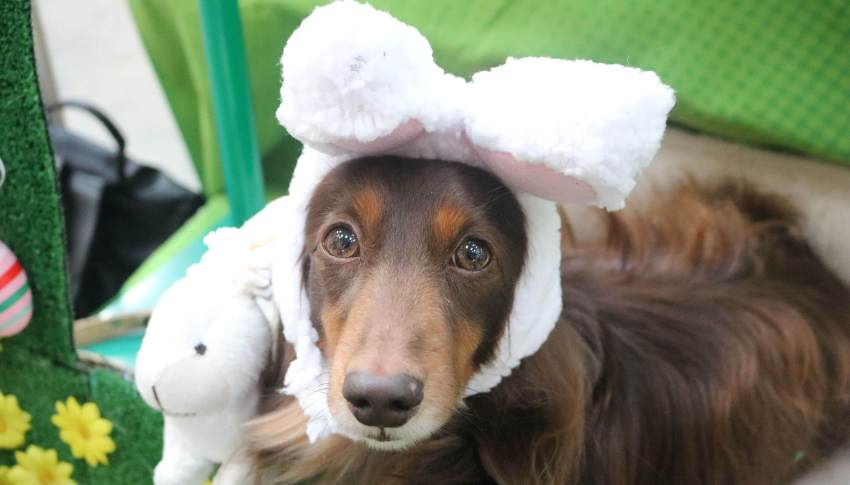 The Clymping Isolation Dog Show!