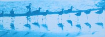 Birds on Parade Blue