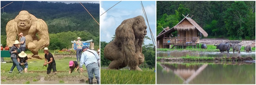 Huay Tueng Thao - King Kong - Montage