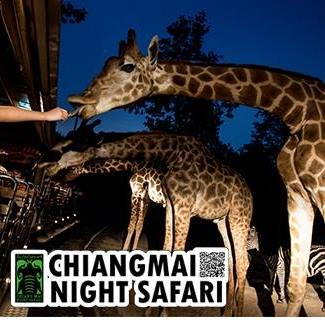 Night Safari Logo FB