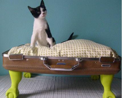 valigia-gatto