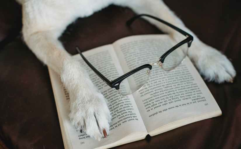 dog putting paw on book with eyeglasses - favourite books