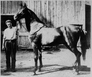 GENERAL BEALE or ABDUL HAMID II at 21 years of age. He was Leopard's first get. His dam was MARY SHEPHERD in-bred to HENRY CLAY. This was one of Randolph Huntington's planned Clay-Arab crosses.