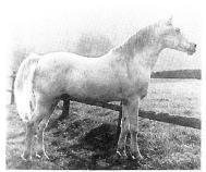 Jasir 1925 (Mabrouk Manial x Negma)