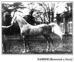 NASEEM (Skowronek x Nasra)