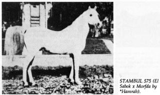 STAMBUL 575 (El Sabok x Morfda by *Hamrah)